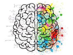 les hémisphères cérébraux humains