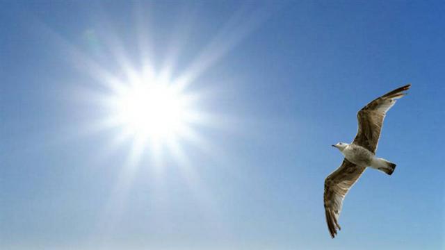 Goéland en vol vers le soleil